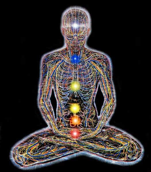 The Seven Primary Chakras in the human body are: